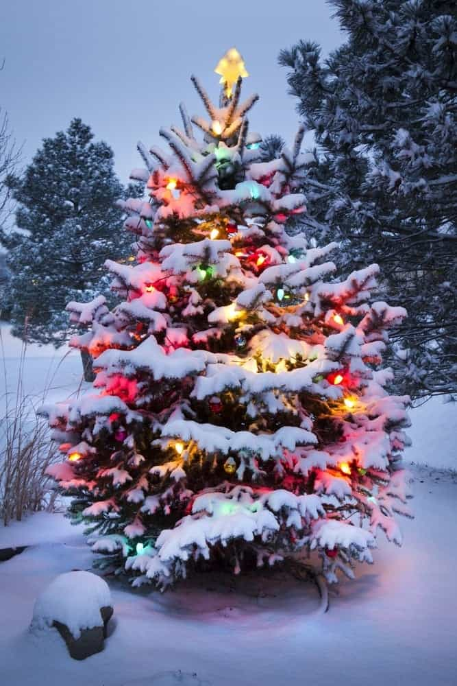 Christmas tree decorated with lights in the snow