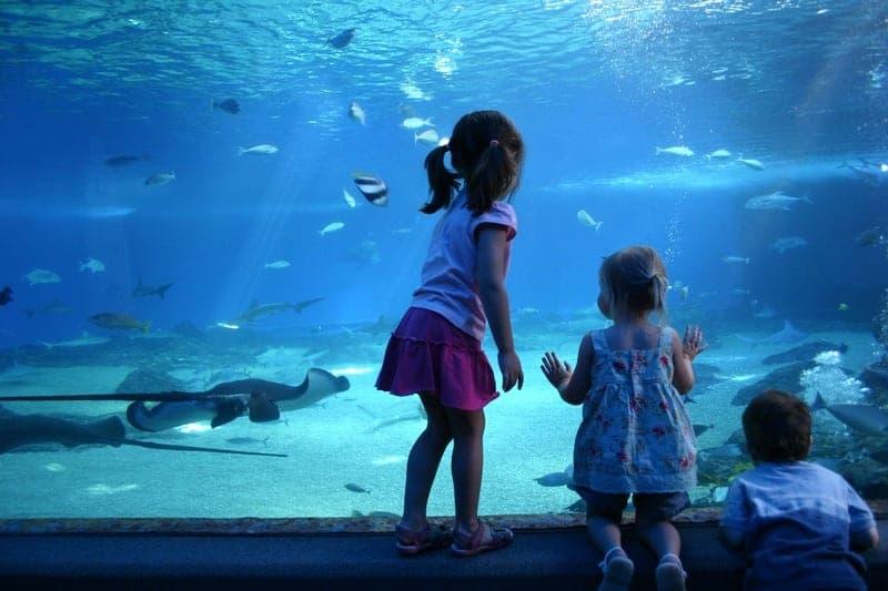 Kids in front of aquarium