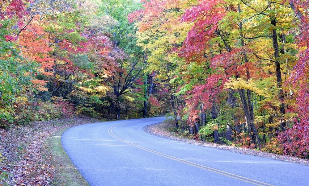 Fall colors lining a road in the Smoky Mountains