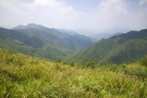 View of the greenery in the mountains
