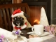 5 Benefits of Booking Our Pet Friendly Cabins in Gatlinburg TN for the Holidays